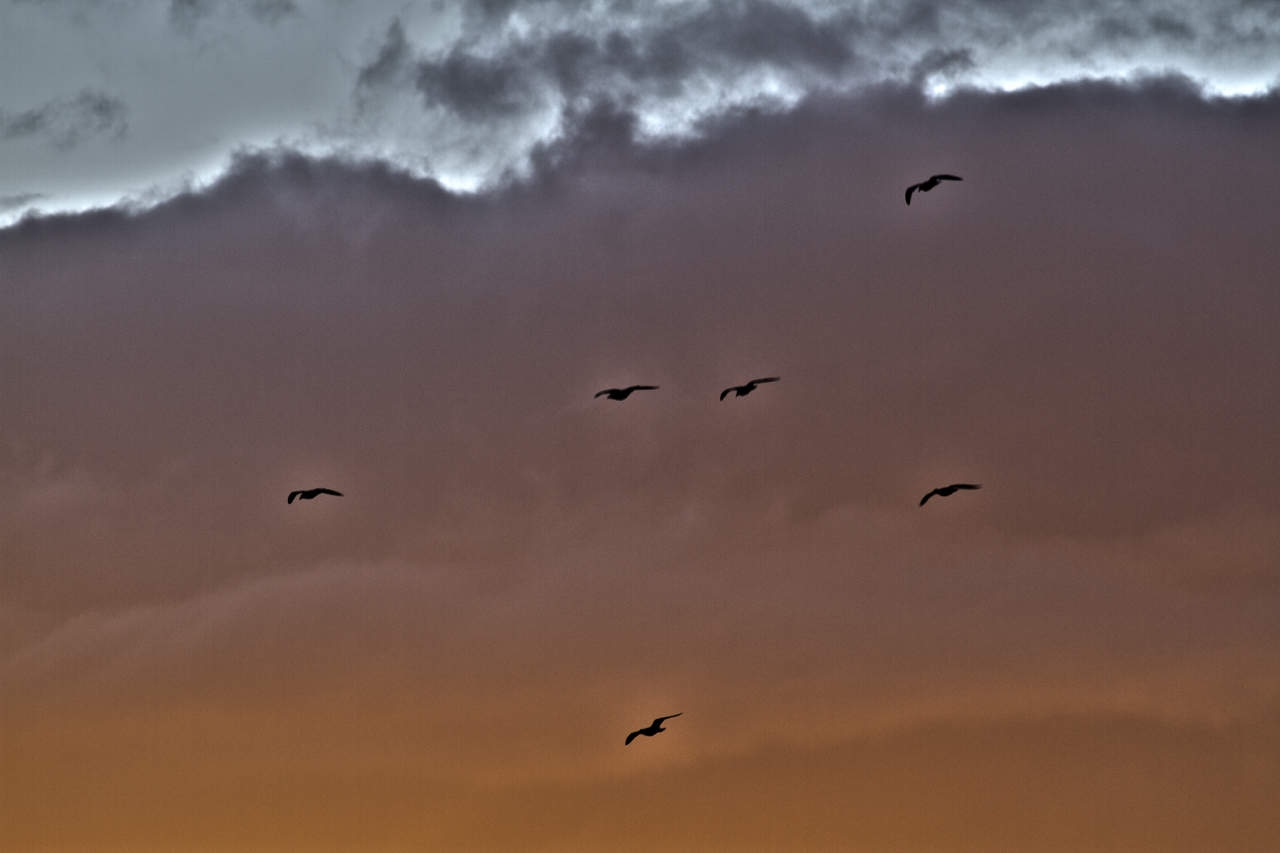 birds in sunrise
